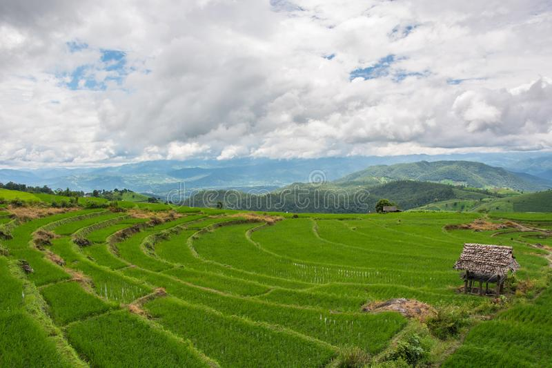 Grön risfält på berget med dimma i Chiang Mai Thailand, Ri arkivfoton