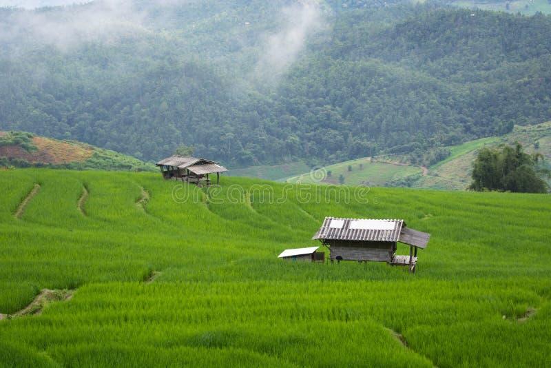 Grön risfält på berget med dimma i Chiang Mai Thailand, Ri royaltyfri bild