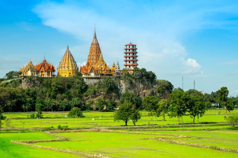 Grön risfältskönhet i templet Kanchanabu för sua för naturwattum arkivbilder