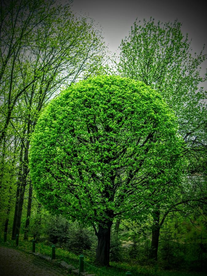 grön rund tree arkivbilder