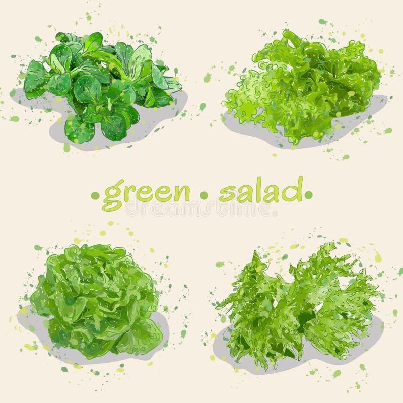 grön sallad stock illustrationer