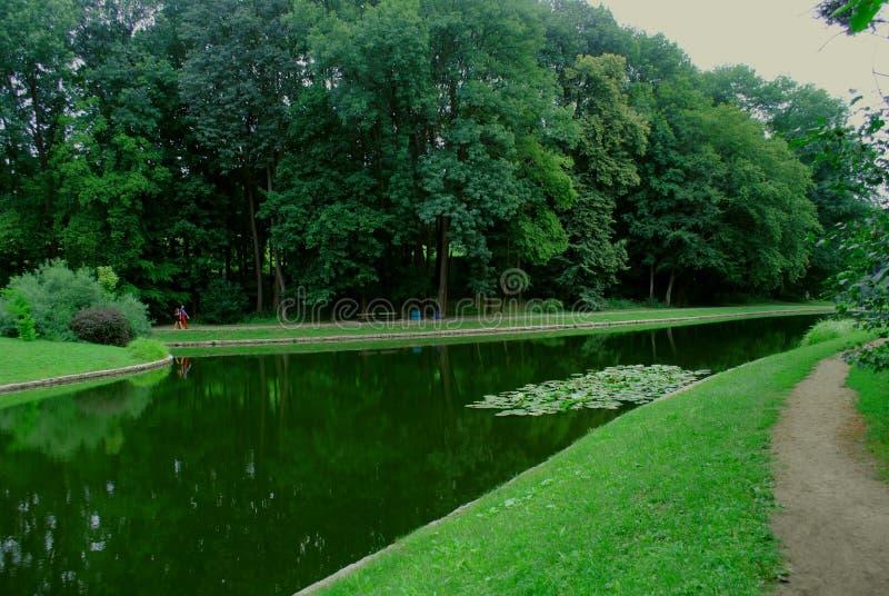 Grön sjö mellan träden i botaniska trädgården arkivbilder