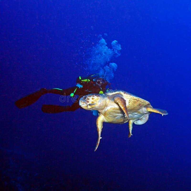 Grön sköldpadda och dykare royaltyfria bilder