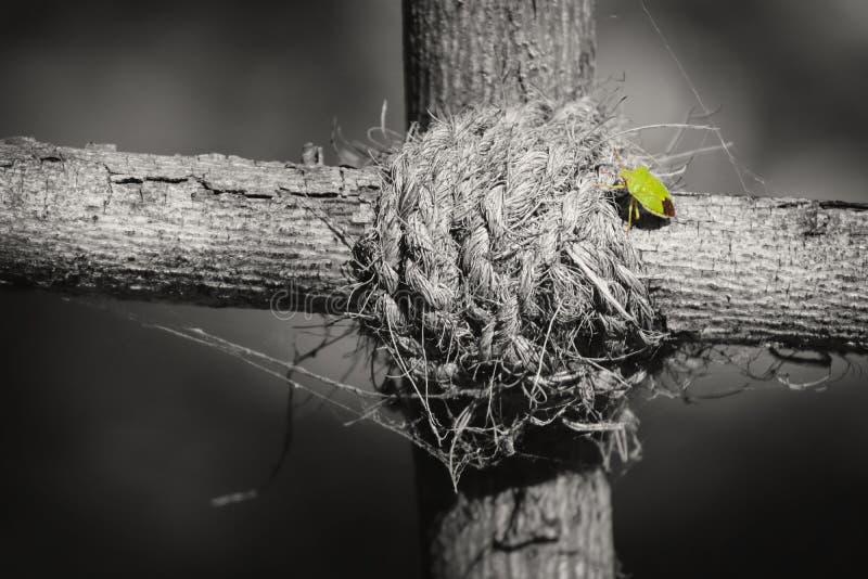Grön skalbagge på knutpunkten fotografering för bildbyråer