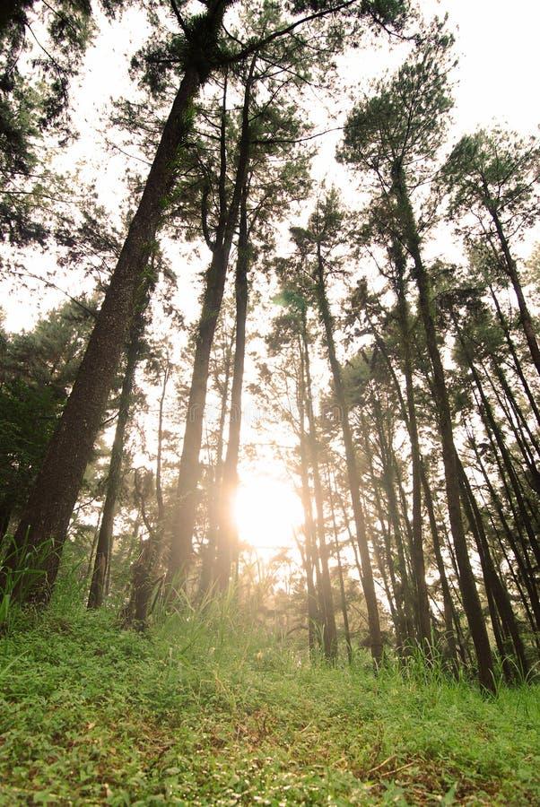 Download Grön skog fotografering för bildbyråer. Bild av plats - 27277657