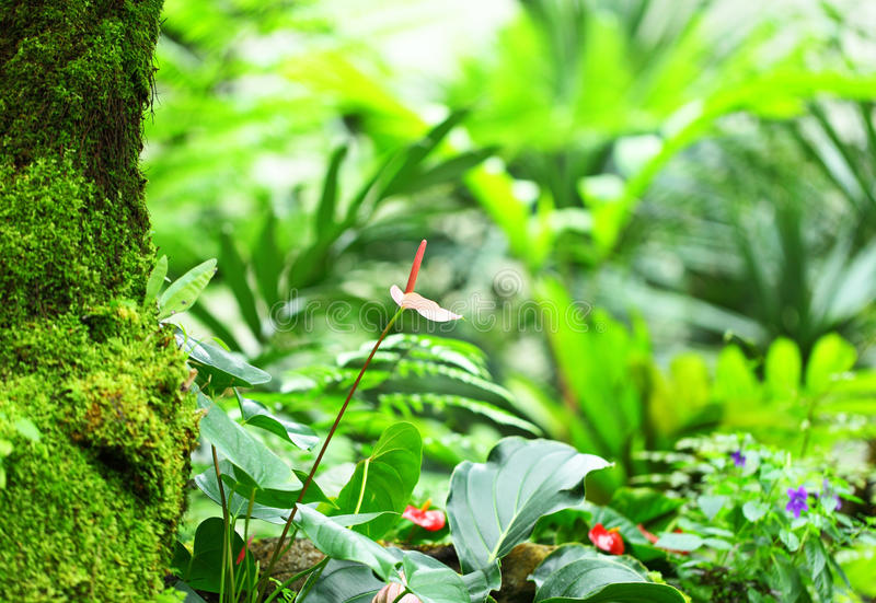 Download Grön skog arkivfoto. Bild av lampa, liggande, säsong - 27279666