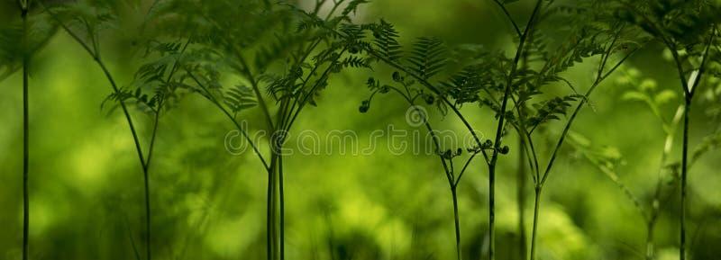 Grön skog av ormbunkar royaltyfria bilder