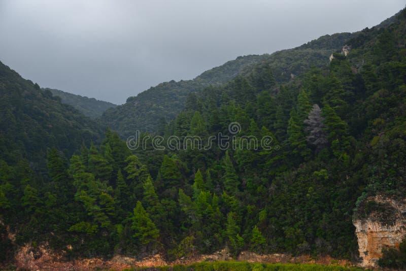 Grön skog för regn royaltyfri fotografi