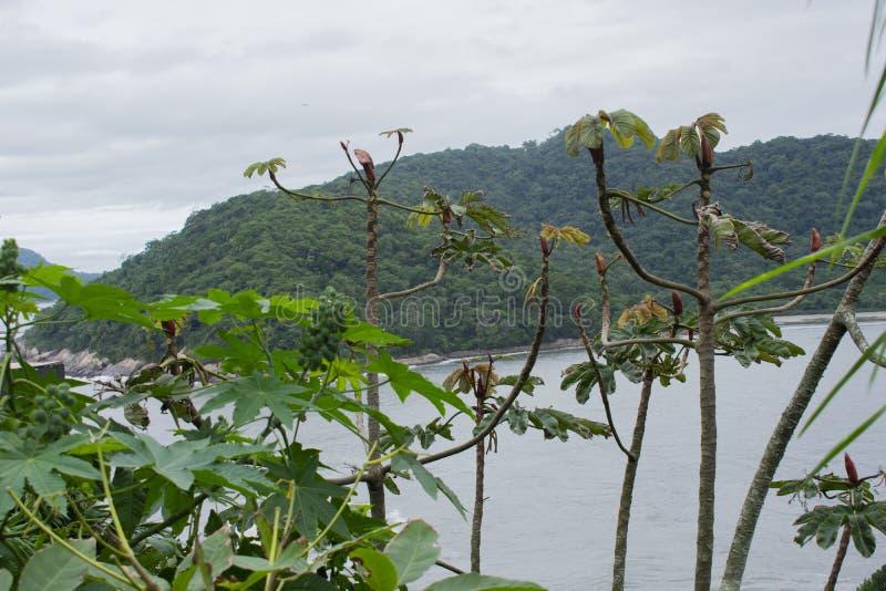 Grön skog i berg på Sao Vicente Beach Brazil arkivfoton