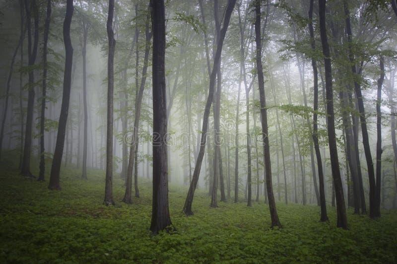 Grön skog med dimma och regn i sommar royaltyfri bild