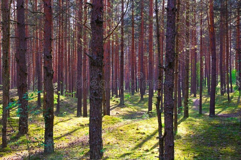Grön skog med skuggor från solen royaltyfria bilder