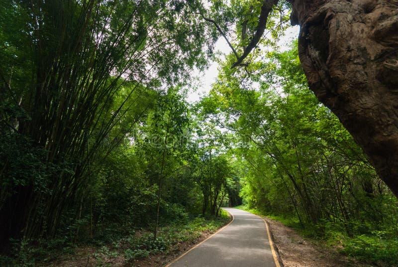 Grön skog och en väg royaltyfria foton