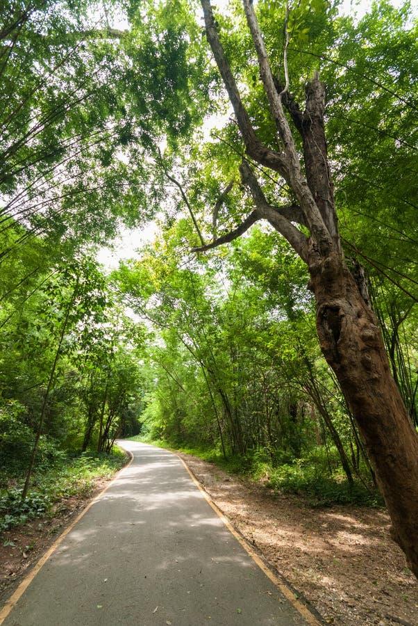 Grön skog och en väg royaltyfri fotografi