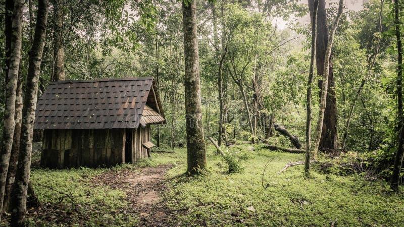 Grön skog och kojor i en dimmig morgon, Malaysia. fotografering för bildbyråer