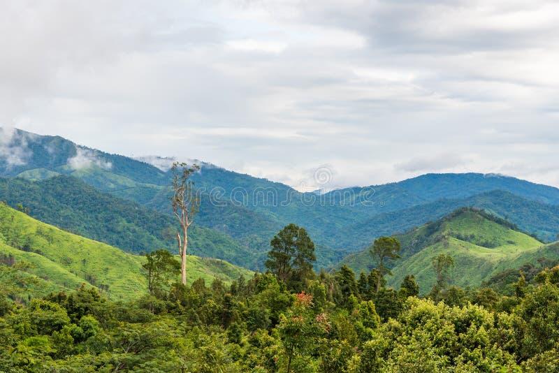 Grön skog på bergskedjalandskap med blå och molnig himmel royaltyfri fotografi