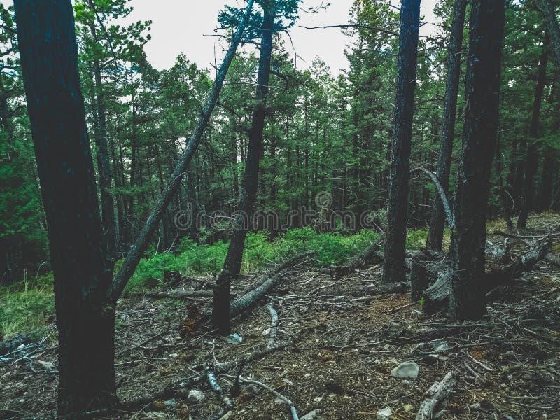 Grön skog på en lutning arkivfoto