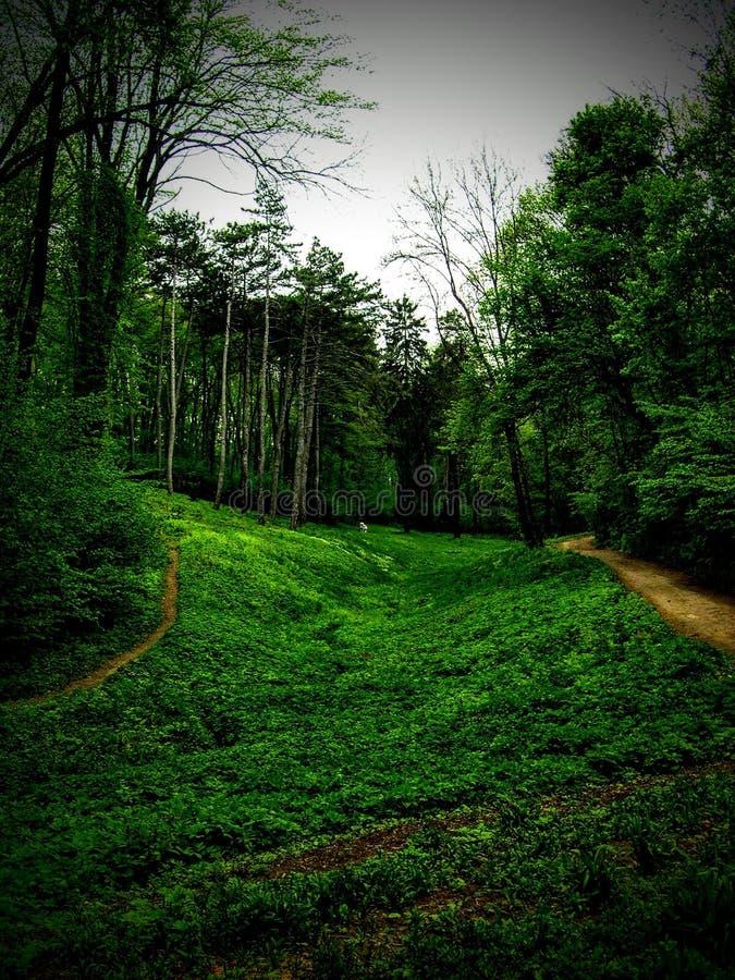 Grön skog Uman royaltyfri foto
