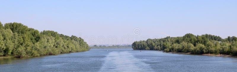 Grön skog vid floden royaltyfri foto