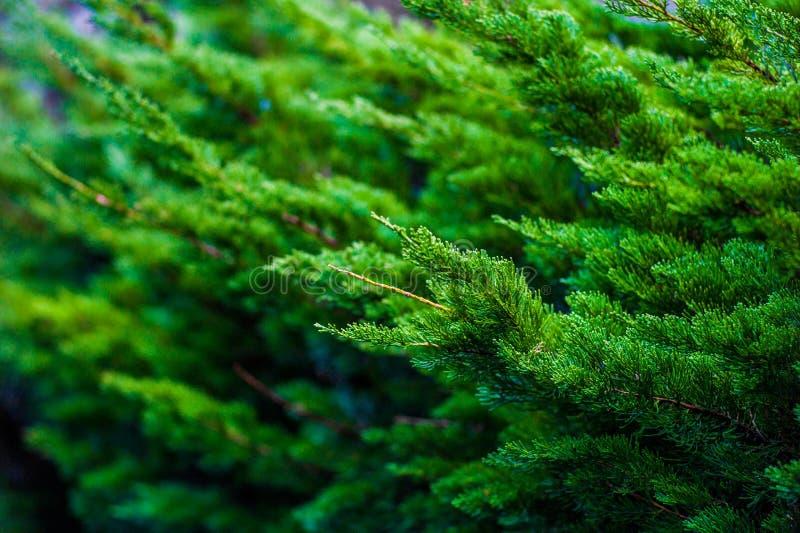 Grön skogbakgrund Begrepp av brunnsorten, kopplar av, wellnessen, naturen etc. royaltyfri foto