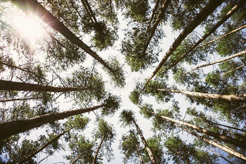 Grön skogbakgrund i en solig dag arkivfoto