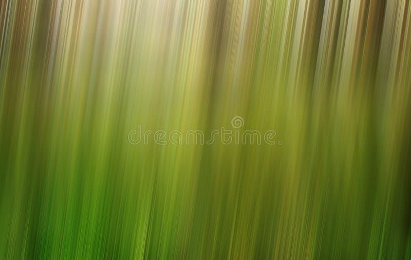 Grön skogsuddighetsbakgrund royaltyfria bilder