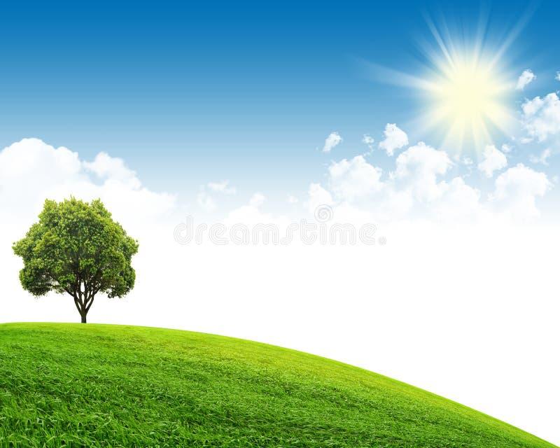 grön sky för fält