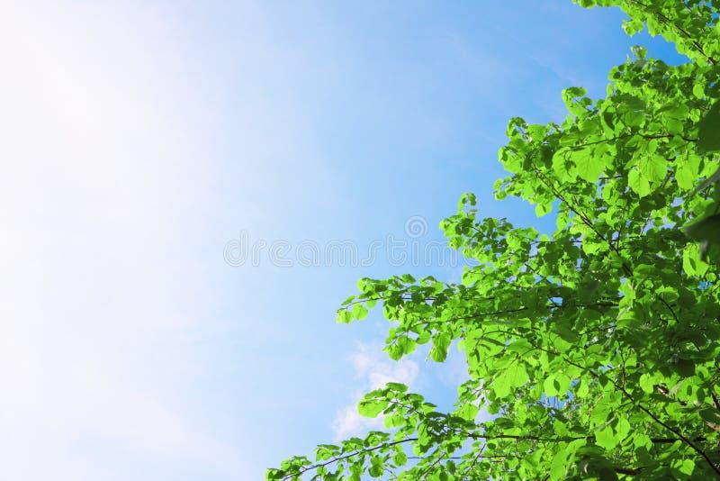 grön sky för krona fotografering för bildbyråer