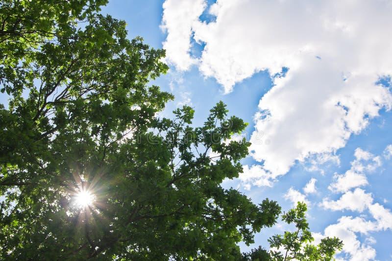 grön sky för krona royaltyfri fotografi