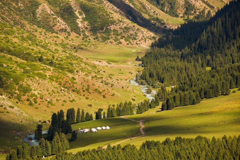 Grön solig glänta och tältplats Dalen Jeti oguz kyrgyzstan royaltyfria foton