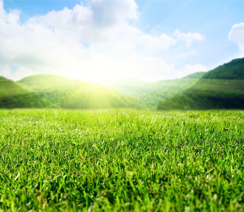 grön sommar för fält arkivbilder