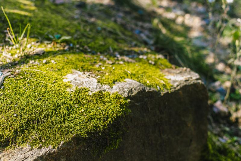 Grön sommarmossa royaltyfria foton