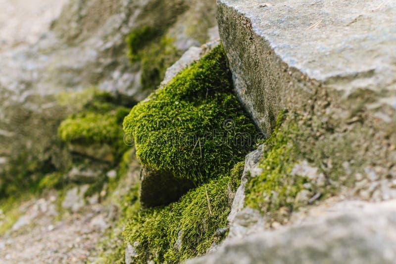 Grön sommarmossa royaltyfri foto