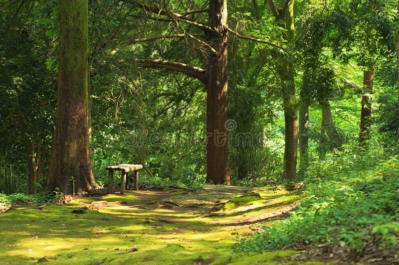 Grön sommarskog med bänken royaltyfria bilder