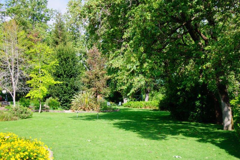 Grön sommarträdgårdträdgård med gräs efter regn och solen royaltyfri foto