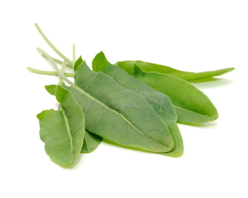 Grön Sorrel lämnar på vitbakgrund royaltyfri fotografi