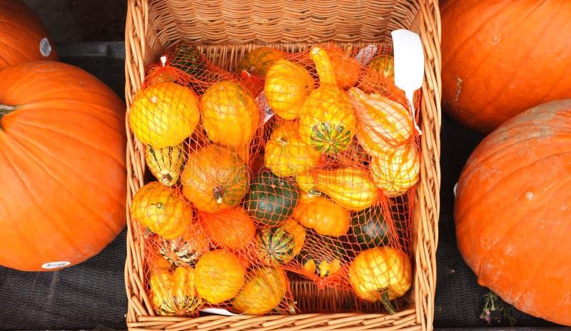 Grön specerihandlare Stall Pumpkin Harvest royaltyfria bilder