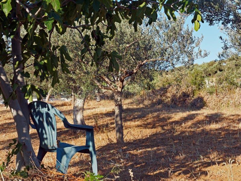 Grön stol i Olive Grove arkivbild