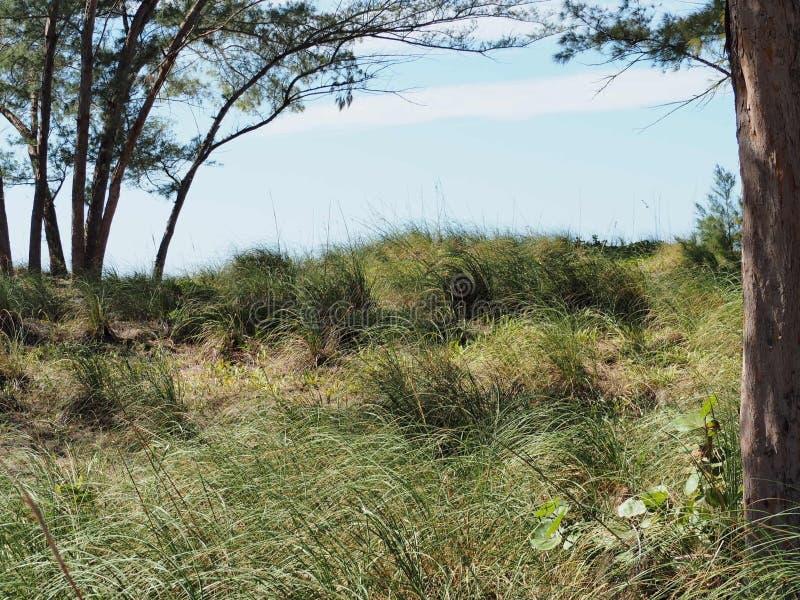 Grön strand royaltyfria bilder