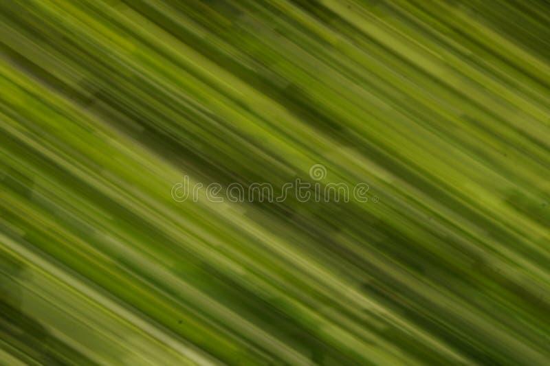 Grön strimmasuddighet royaltyfri foto