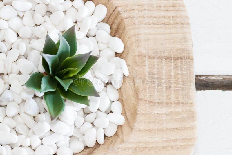 Grön suckulent i vita kiselstenar med tappningträbakgrund arkivbild