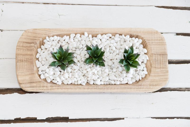 Grön suckulent i vita kiselstenar med tappningträbakgrund arkivbilder