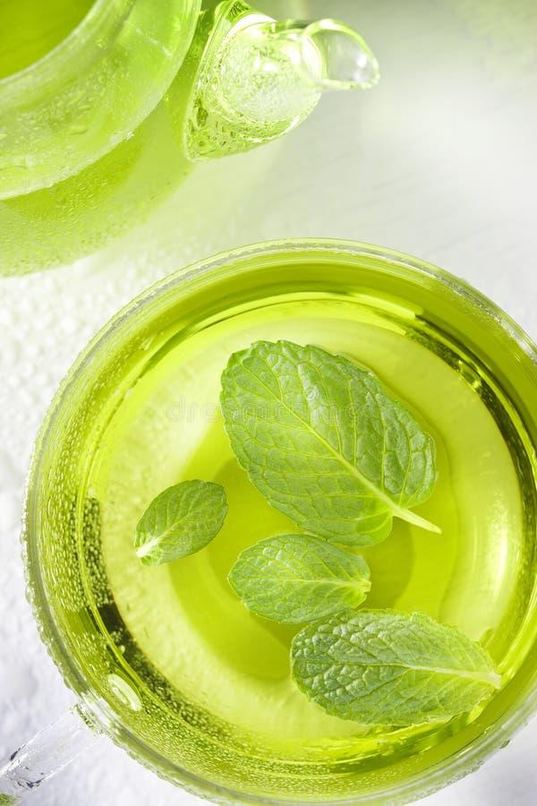 Grön sund mintkaramelltekopp royaltyfri fotografi