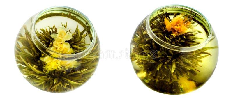 grön tea för chrysanthemums arkivbilder