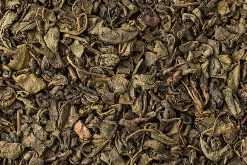 Grön tea för krut arkivfoto