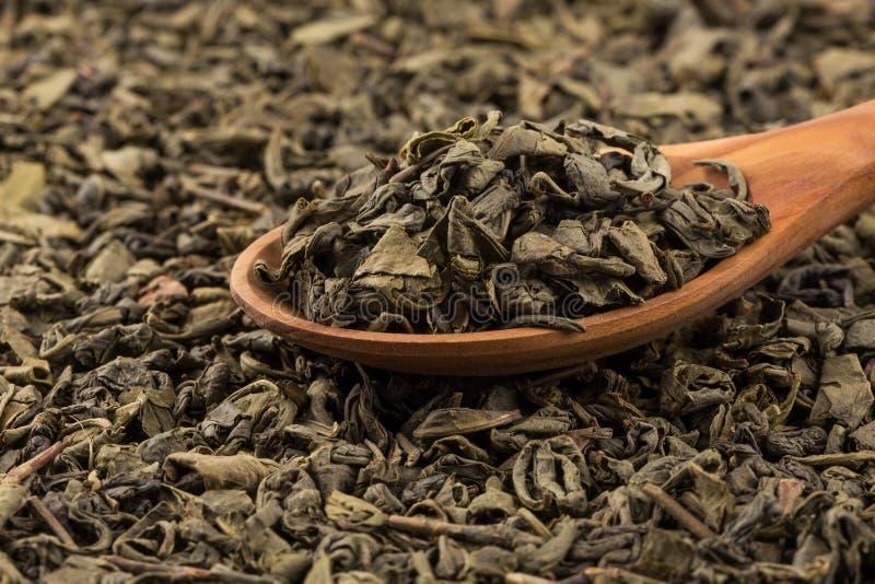 Grön tea för krut arkivbild