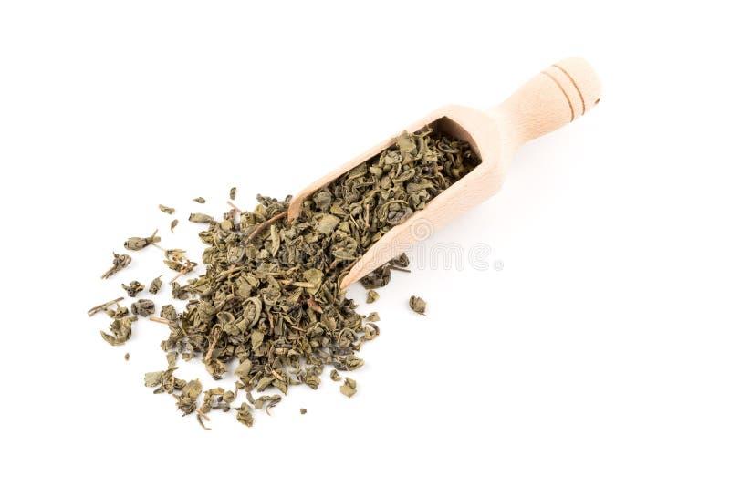 Grön tea för krut royaltyfria foton