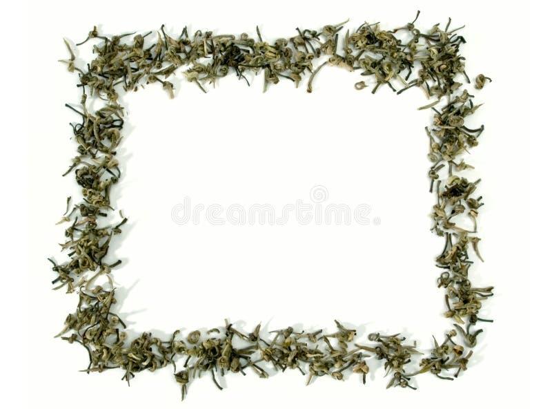 grön tea för ram fotografering för bildbyråer