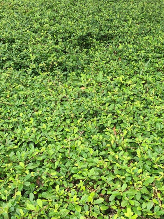 grön textur royaltyfria foton
