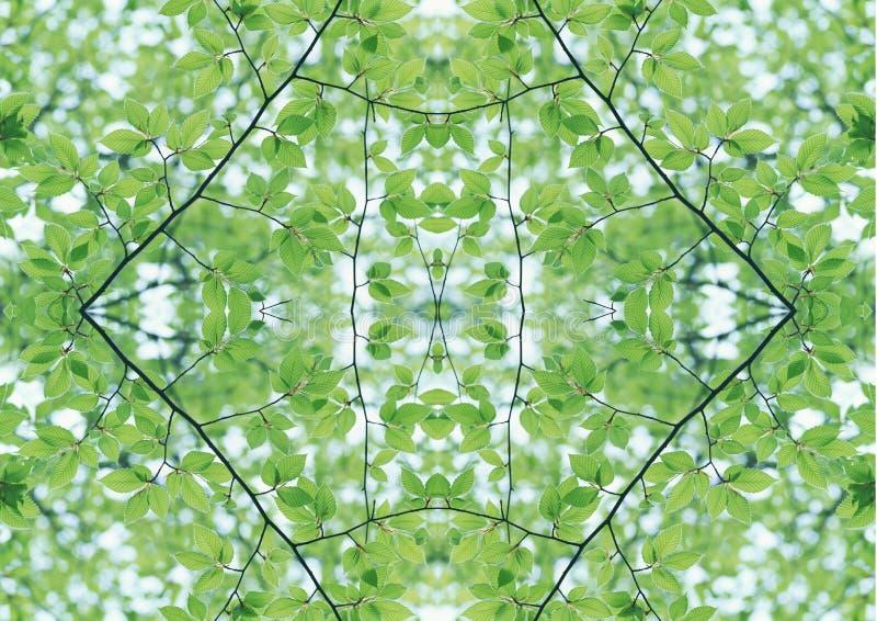 Grön textur | Blom- modell | Designbeståndsdel | Texturerad bakgrund royaltyfria bilder