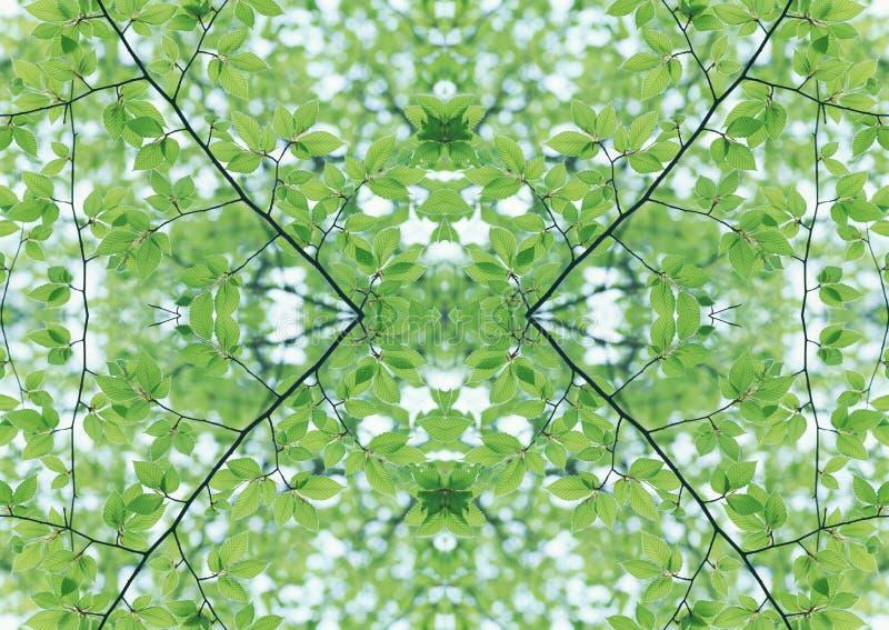 Grön textur | Blom- modell | Designbeståndsdel | Texturerad bakgrund arkivbild